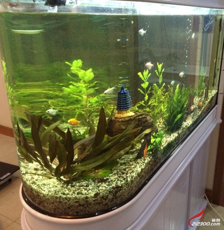 出二手风景鱼缸一个