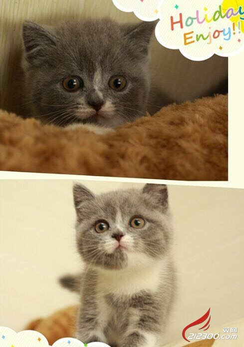 扣扣头像猫咪可爱